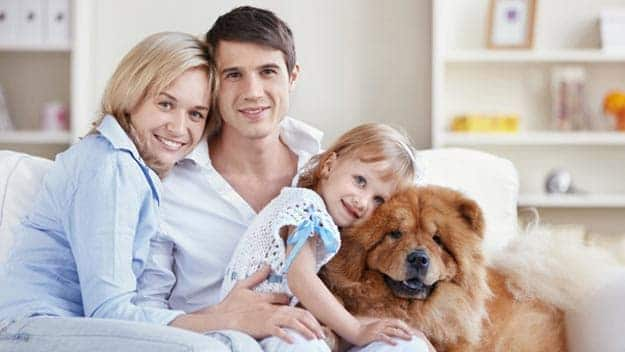 Wills & Trusts dog-young-family Direct Wills Wembley